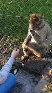 2014-10-09 Zoo Ebbs Affe